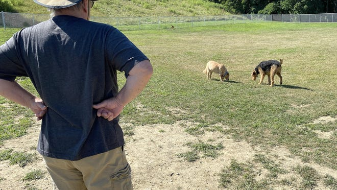 John Heil, an organizer at Presley Memorial Dog Park, watches dogs enjoy the park.