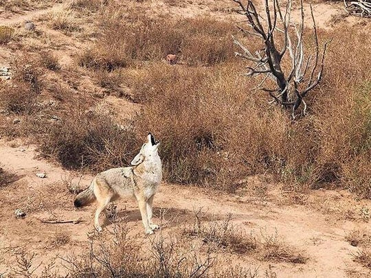 Wildlife West Nature Park is not your ordinary zoo. Just a short drive east of Albuquerque, it's located near I-40 at 87 East Frontage Rd. in  Edgewood.