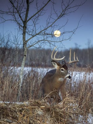 The 2016 deer kill was down despite a statewide herd that was likely larger this year.