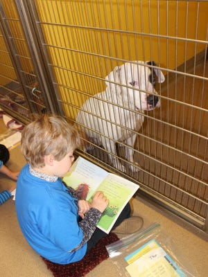 Thor Callaham, a student in Katie Laughridge first grade class, reading to a dog up for adoption at P.A.W.S. Animal Shelter in Anderson.
