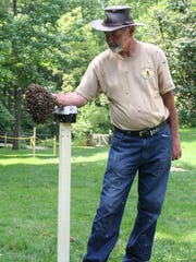 """Jeremy Barnes, from Springfield Township, handles a cluster of honey bees. Barnes recently won the 2017 Pennsylvania State Beekeepers Association """"Beekeeper of the Year"""" award."""