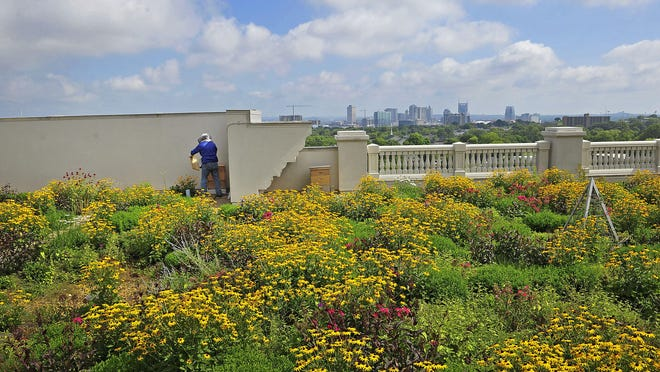 Belmont University President Bob Fisher works on hives on the green roof of Wedgewood Academic Center on the Belmont University campus.