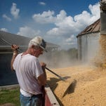Crop yields expected to be 'average'