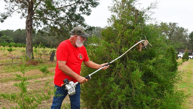 Cut your own Christmas tree at Watson Farm