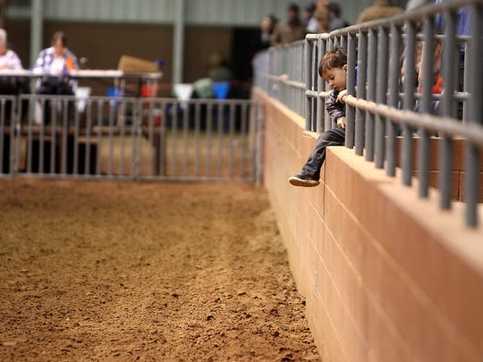A little boy hangs from the metal bars in the stands inside the Cattle Barn as judges in the back wait to for contestants to show their steers during the Junior Market Steer Show Tuesday, February 7, 2017 during the 85th annual San Angelo Stock Show & Rodeo.