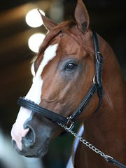 Triple Crown winner Justify looks out of his barn on