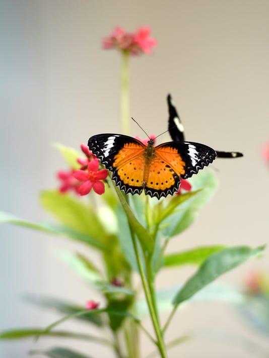 ldn-mkd-062416-butterfly-