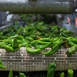 Vote - Best Green Chile in New Mexico Nominees