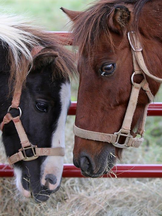 636100872057034312-js-0922-Horses-0007.jpg