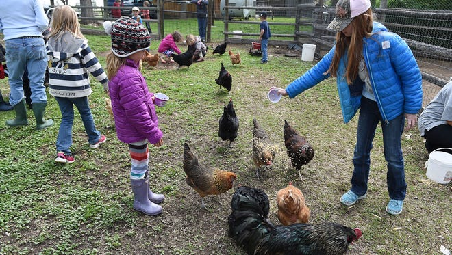 "Savannah Smith, 9, feeds chickens at Laughing Buck Farm on Tuesday, May 10, 2016. ""I'm the chicken whisperer around here,"" she said. Laughing Buck Farm has various farm school classes and summer camp options to teach kids about farm life and nature through hands-on activities."