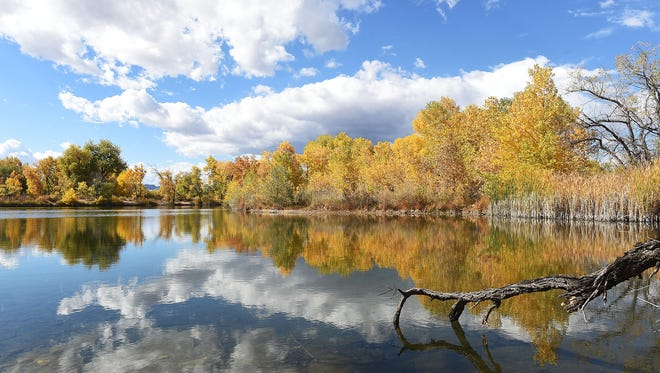 Fall colors stand out at Riverbend Ponds Natural Area in this 2016 photo from the archives.