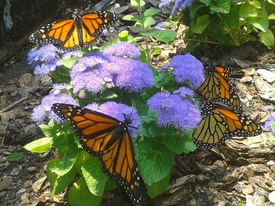 The Panhandle Butterfly House in Navarre will hold its annual grand opening from 10 a.m. to 3 p.m. Saturday.