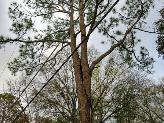 636234595697668148-Hazardous-trees-over-utility-lines-2-DWMarshall.jpg