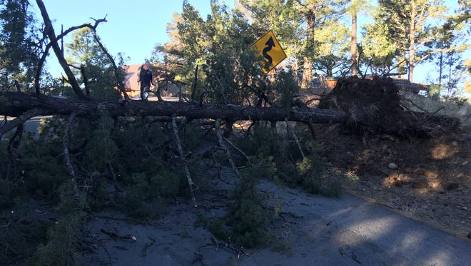 David Northington surveys a downed tree blocking Yellow Pine Road after Saturday night's high winds.