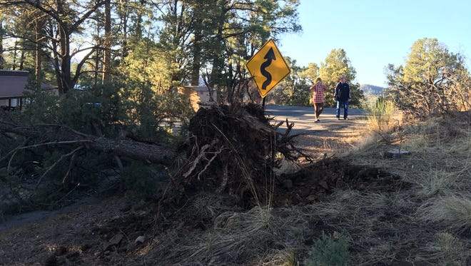 Pat and David Northington awoke Sunday to find that a pine tree felled by overnight gusts blocked Yellow Pine Road. A village crew had it cleared in a few hours.