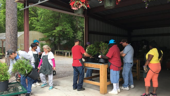 Arc Gateway clients work together to re-pot season plants Monday morning at the Arc Gateway Nursery. The nursery is in full bloom for spring and has a wide variety of plants, shrubs and vegetables for sale.