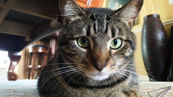 Ryan took this photo of the family cat, Fabio.