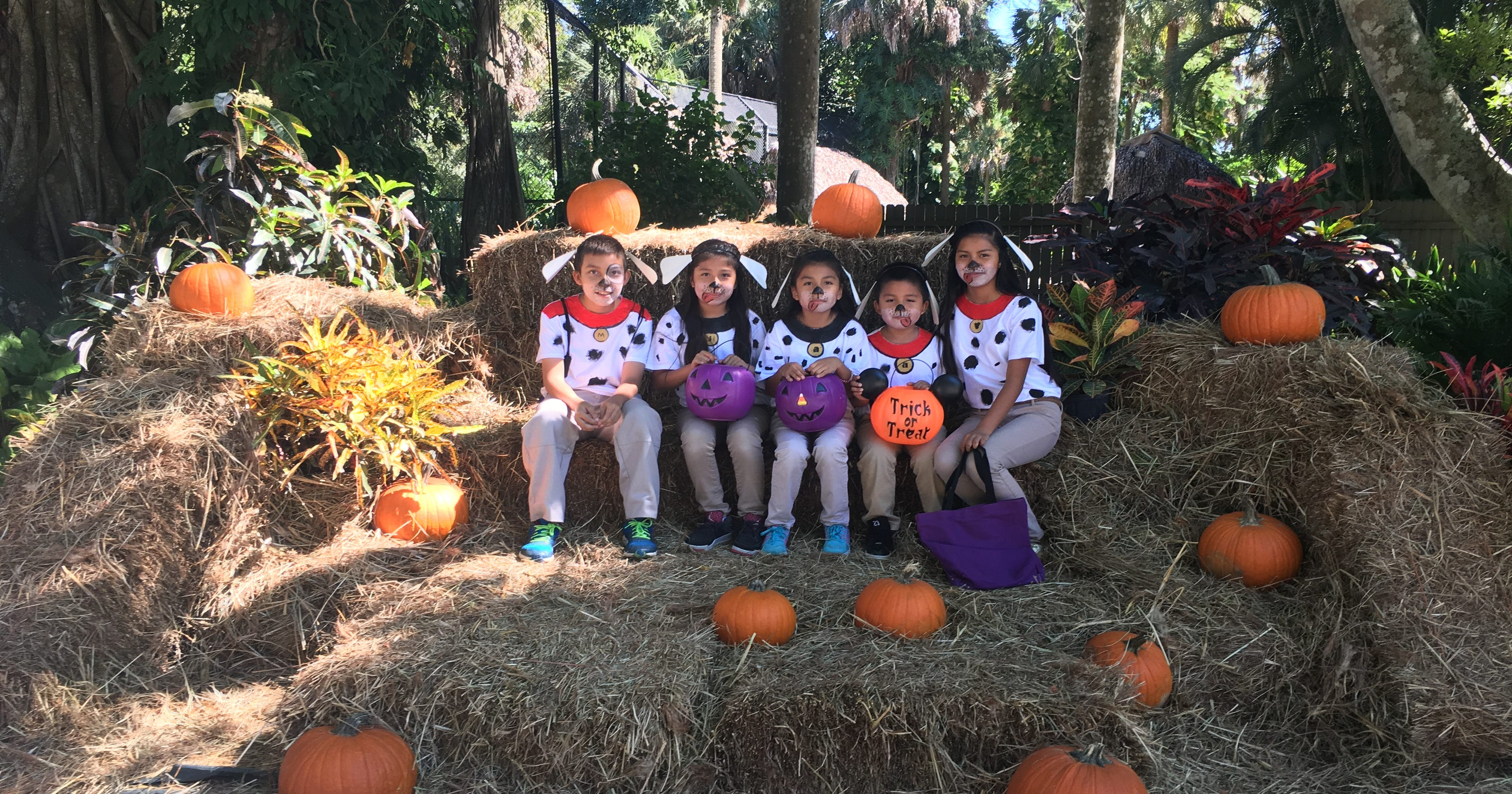 Where to find Halloween and fall events in Naples, Fort Myers, Bonita