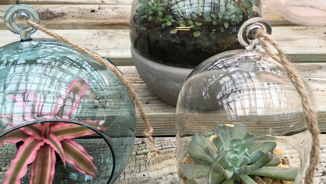 Terrariums that are back in vogue include hanging glass bubbles, cloches, large glass vases in peculiar shapes and just about any clear container that allows sunlight to penetrate.