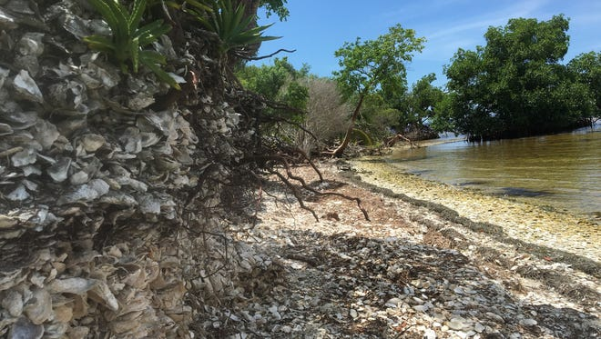 , the Florida Public Archaeology Network (FPAN) is recruiting the public to become citizen scientists in monitoring historic sites along shorelines, including Calusa Island.