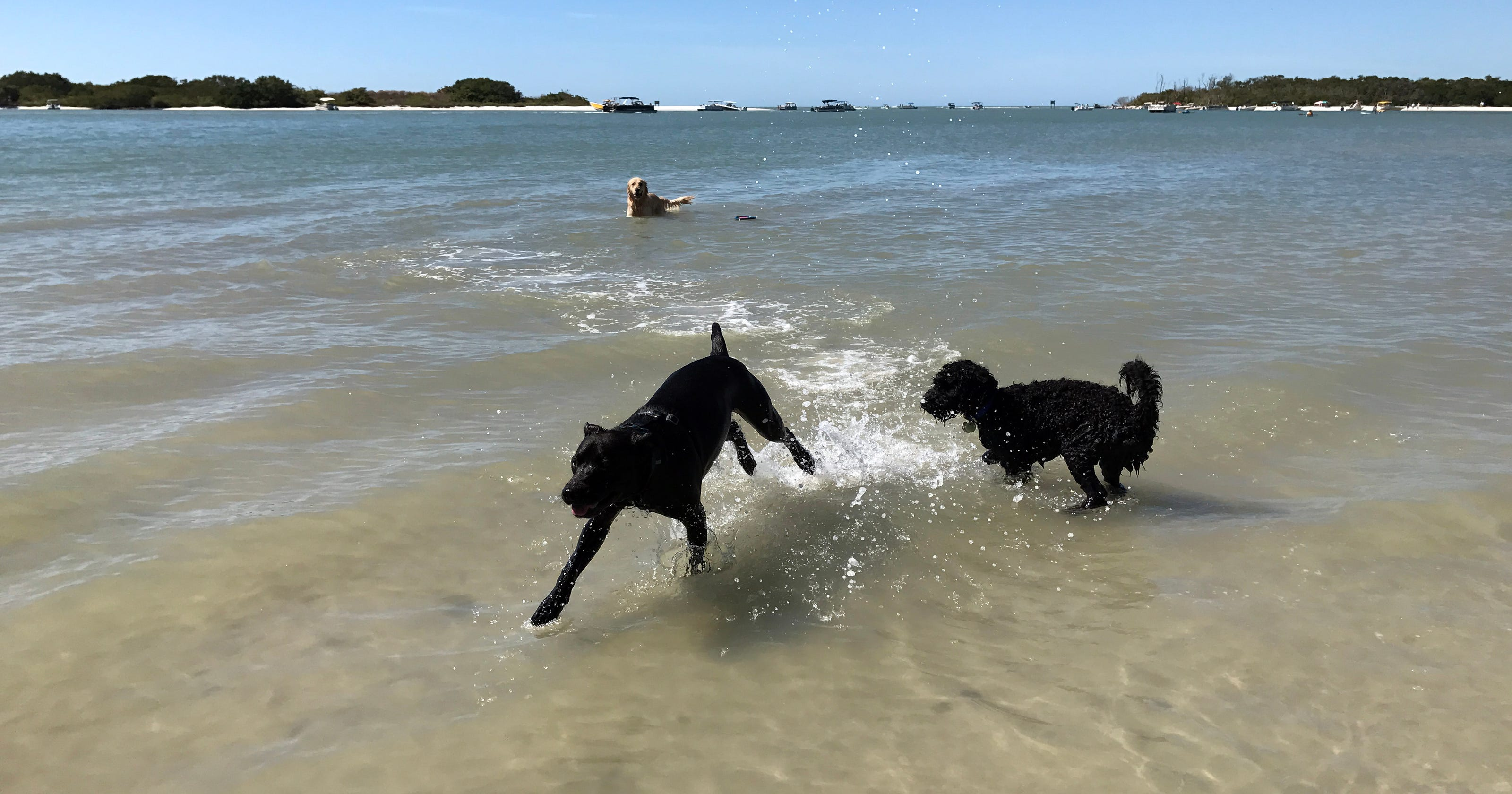 20 pet friendly things to do in southwest florida solutioingenieria Gallery