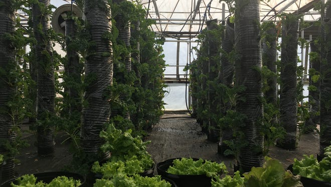 The greenhouse at JMD Farm Market and Garden Center outside of Staunton where large hanging planters are located — an invention the owner came up with to save space and increase product count.