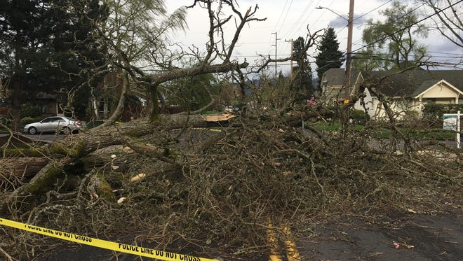 A fallen tree lies across a road after windy weather in Portland on Friday, April 7, 2017.