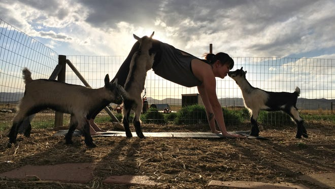 Kaitlin Meuller, owner of Om Kai Yoga, does yoga with baby goats at Small Acre Farm.