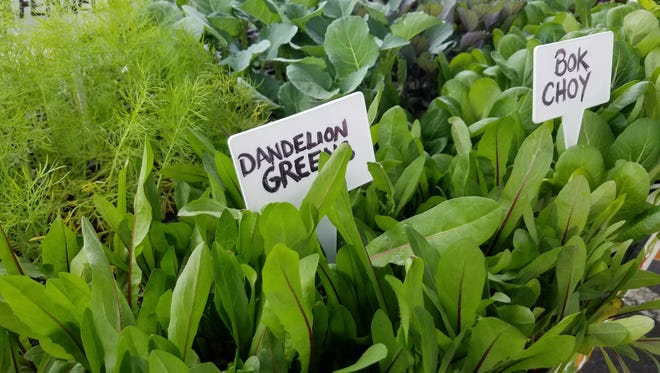 Dandelion greens and bok choy