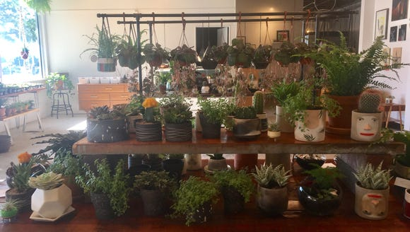 A store selling terrariums, plants and art has opened