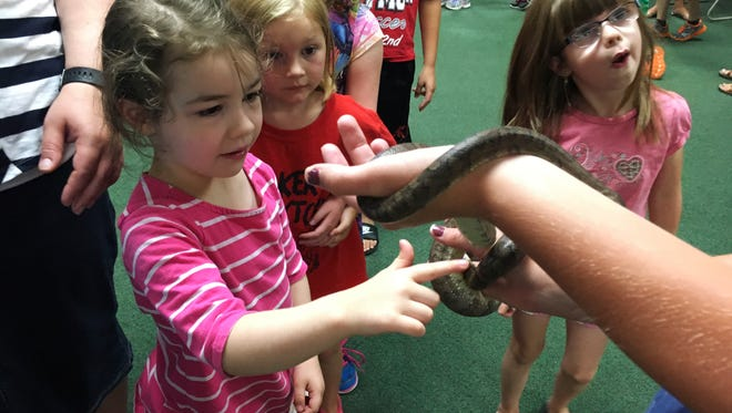 """Ginger Byers, 4, of Fremont, touches an endangered Virgin Island boa snake during the Toledo Zoo's presentation """"Animal Habitats"""" at Fremont's Birchard Public Library on Wednesday."""