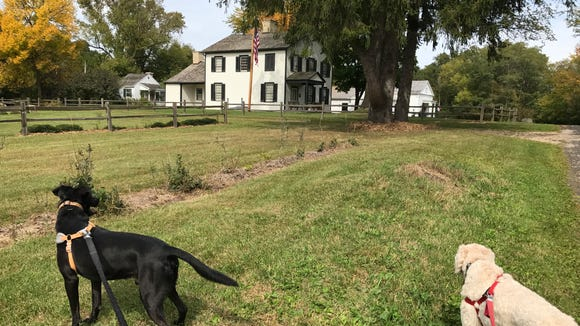 Toby and Henry sniff the grounds of the historic Indian Agency House in Portage.