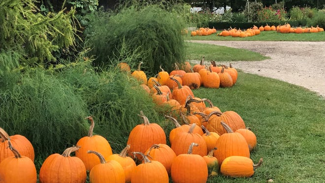Come discover nature's bounty this fall at an AgriTourism business in Wisconsin. Pumpkins line the grounds at The Little Farmer in Fond du Lac County.