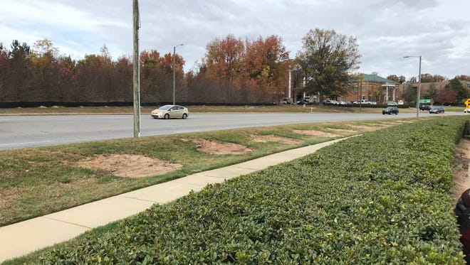 Trees that once lined the sidewalk along Patewood Drive have been removed.