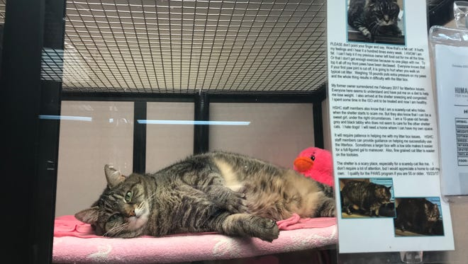 Charolette is waiting for her forever home at the Humane Society for Hamilton County on Friday, Nov. 24, 2017.