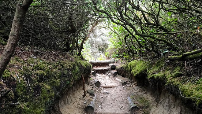 Hobbit Trail at Carl G. Washburne Memorial State Park.