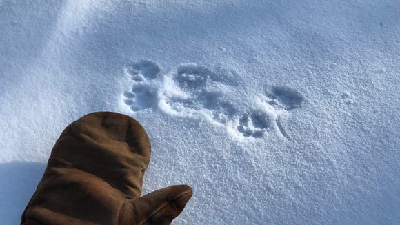 The cold didn't stop some little critters from getting out and about at the Necedah National Wildlife Refuge.