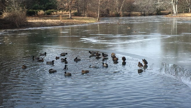 Ducks gather in a gap in the ice on the Chickasaw Gardens lake in Memphis. Despite the current cold weather, 2017 was the sixth-warmest year on record in Memphis.