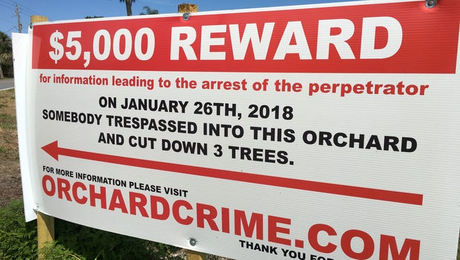 A Merritt Island man advertises $5,000 reward for information leading to the arrest of the suspect who vandalized his orchard.