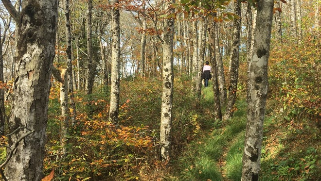 The future of the Pisgah and Nantahala national forests, which cover 1.1 million acres in Western North Carolina, will be discussed at a series of expert panels.