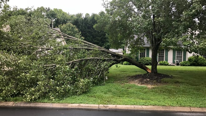 Generally speaking, if a healthy tree falls down in a storm or due to some other act of God, the owner of the tree is not responsible for the damages.