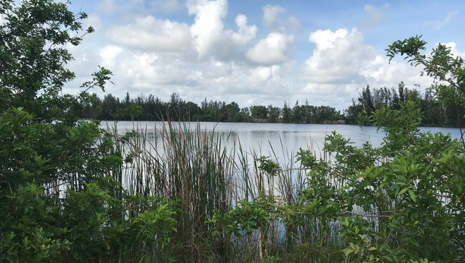 One of two man-made lakes on an 85-acre property off Veterans Memorial Parkway in west Cape Coral. The city may designate the property for multifamily housing.