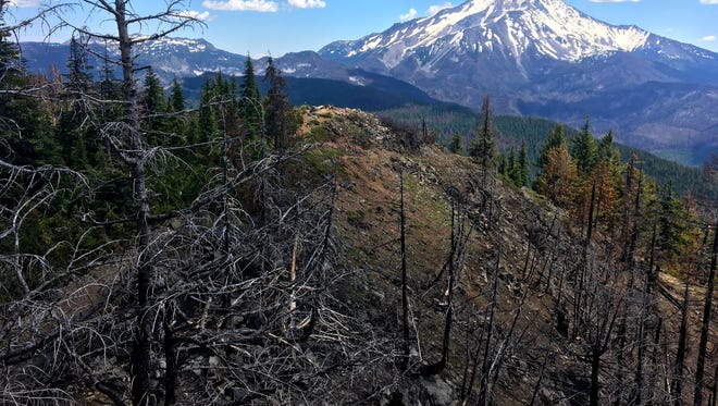 Views from Triangulation Peak of area burned and unburned by the Whitewater Fire of 2017, with Mount Jefferson in the background.