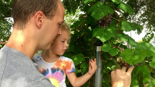 Travel and tourism reporter Leigh Guidry and her family are tackling a new adventure -- local farms. They started with Eddie Romero's Orchard in New Iberia on July 3, 2018. Pictured are Eric and Avery Guidry picking grapes.
