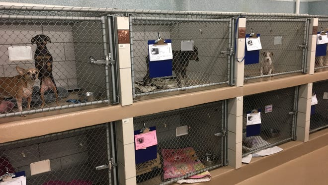Runaway and stray dogs at the Metro Nashville Animal Care and Control shelter on July 5, 2018.