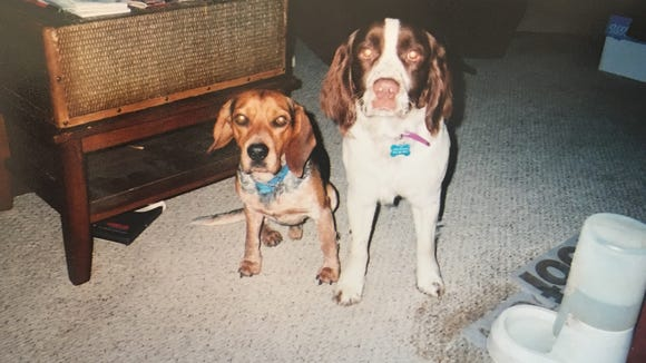 Z&T, back when they were puppies.