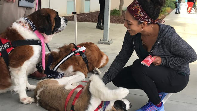 Azalea Power, with the weekly farmer's market, pets a therapy dog at Natividad Wednesday. The dogs are used to comfort those who've suffered trauma.