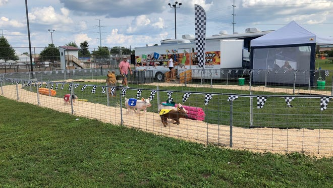 Pigs sprint around a track at the Wisconsin Valley Fair on July 31, 2018.