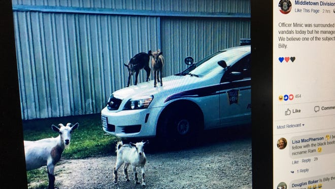 A photo of Middletown Division of Poilce's Facebook post from Aug. 1 shows two goats on the hood of a police car.