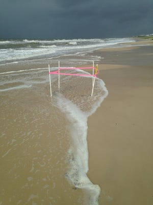 Tropical Storm Colin's storm surge reached the dunes. Most, if not all, of the 58 loggerhead (Cc) nests in the are were washed over if not washed away completely.